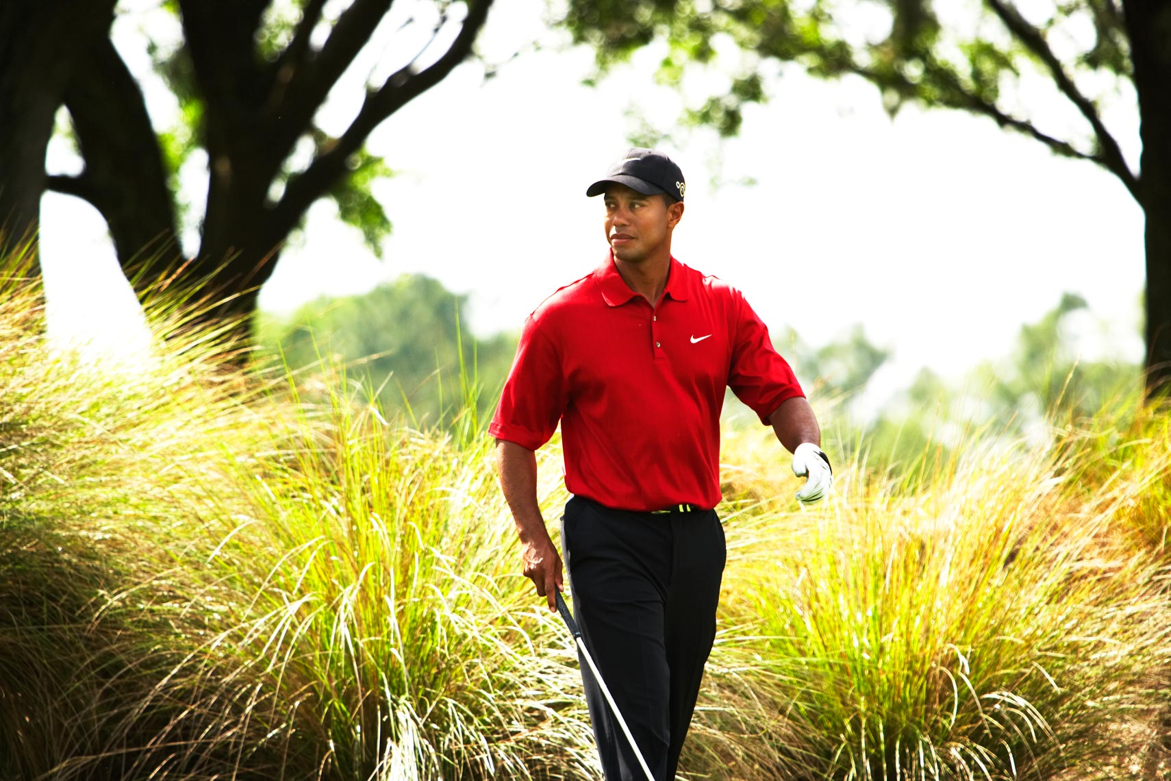 Tiger-Walking-Reeds_work.jpg