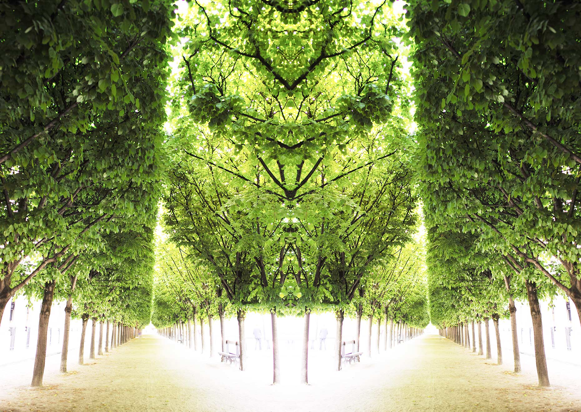 Trees-III-Palais-Royale_web